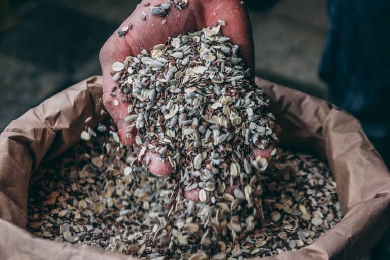 Eine Hand voll Mehrkornmischung, frisch aus der Dorfmühle